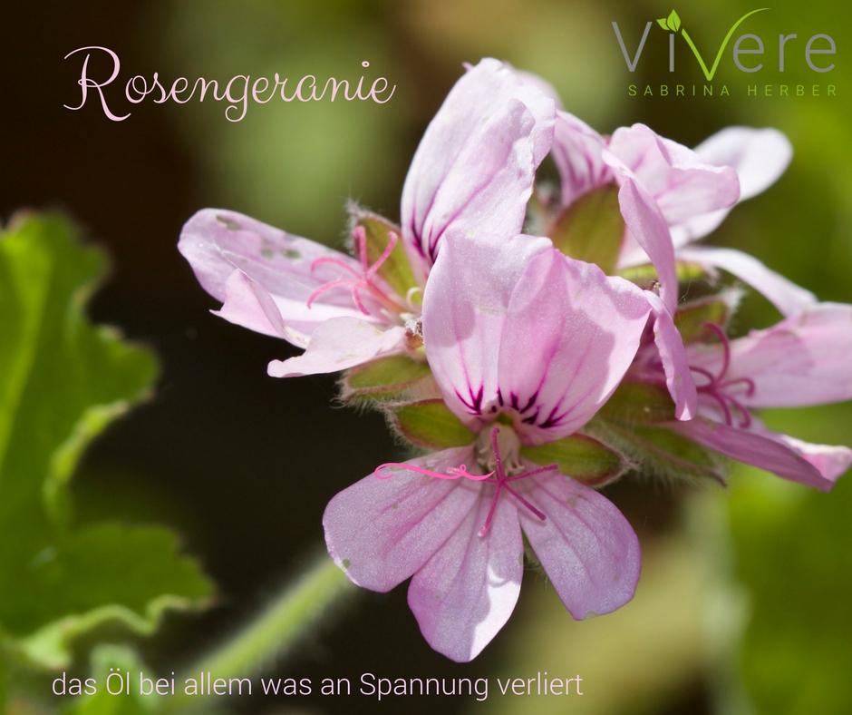Rosengeranie