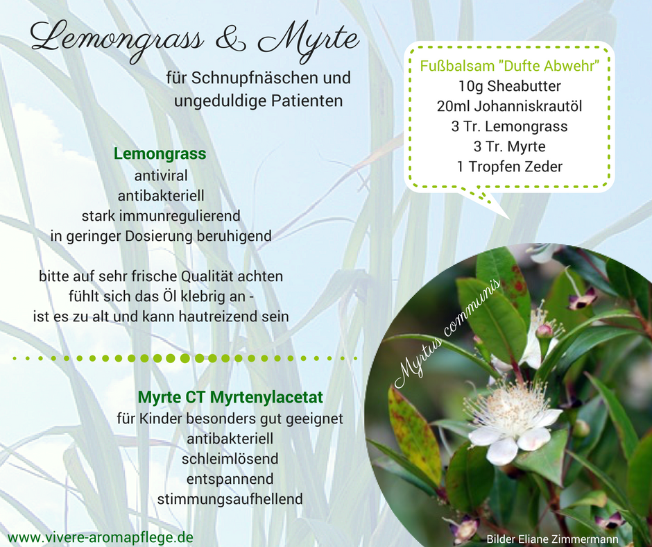 Lemongrass  Myrte