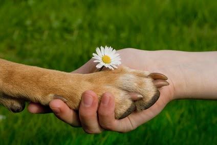 Aromapraktik für Hunde - ein Seminar für Fellnasenliebhaber