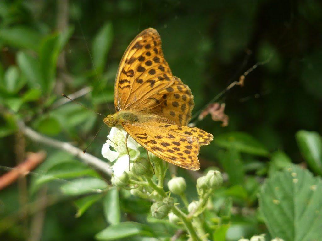 Frühlingsgefühle - Aromatherapie im Frühling