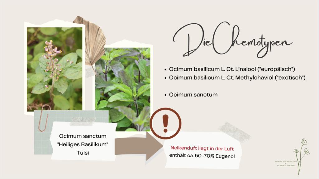 Duftes Verwirrspiel um Cinnamomum camphora