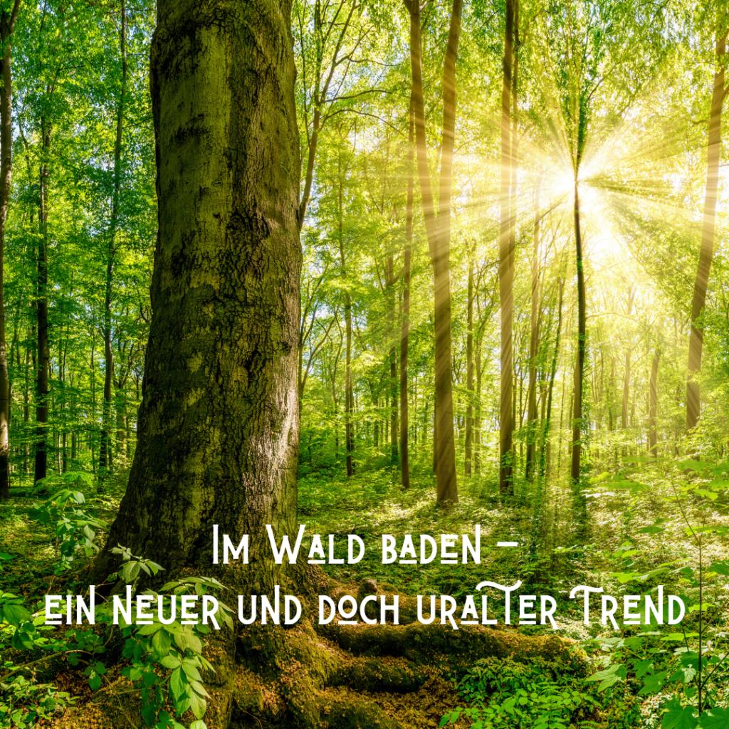 Baden im Wald - ein neuer und doch uralter Trend!