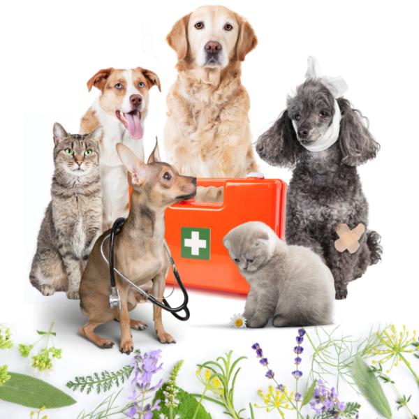 Aromatherapie für Tiere