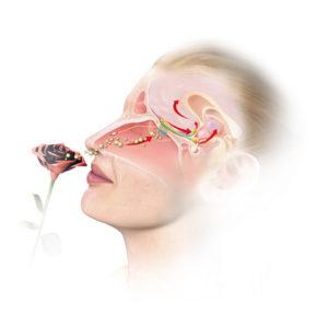 Duftdialog in der (Aroma-)Pflege