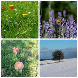Mit Aromatherapie durchs ganze Jahr