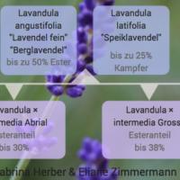 Ausschnitt Lavendel Poster