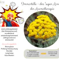 Immortelle Das Super Arnika Der Aromatherapie