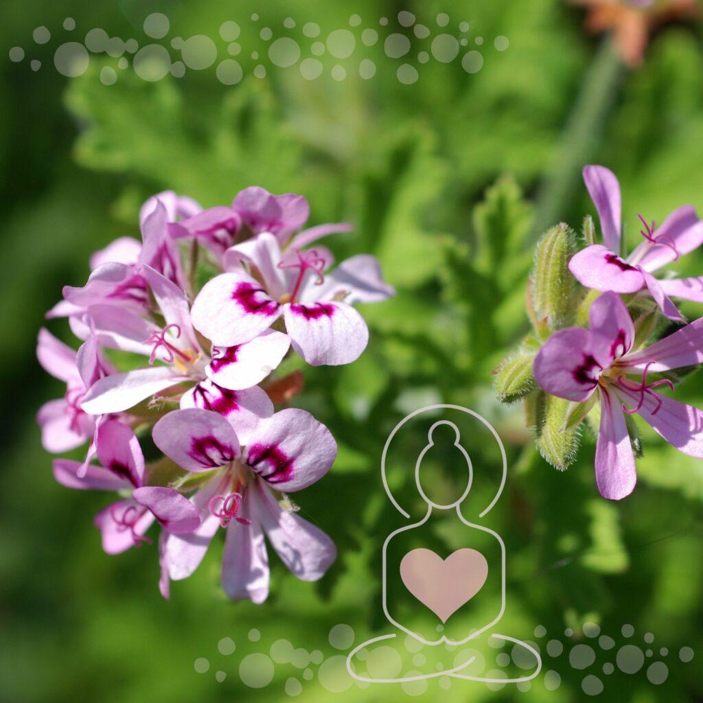 Aromatherapie - Tabuthema Hämorrhoiden